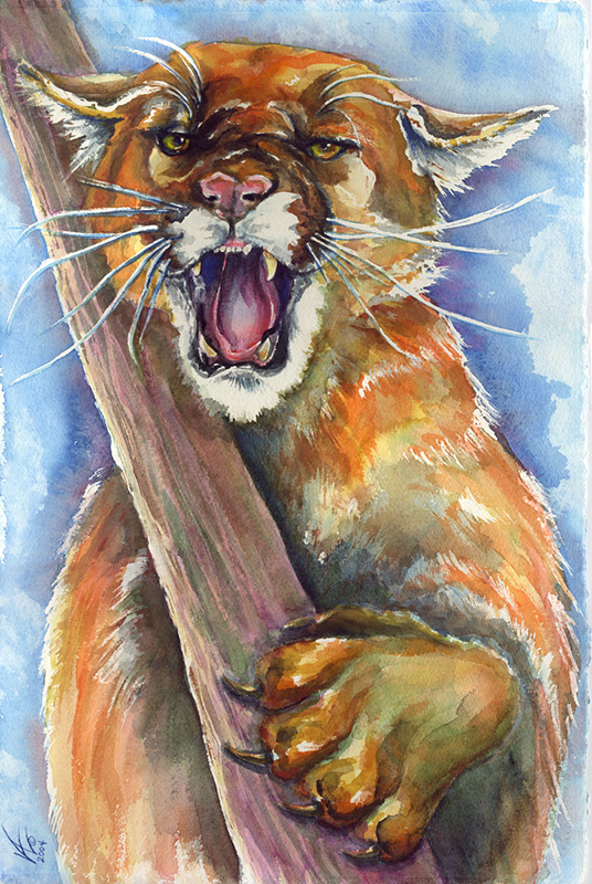 Mountain Lion Snarl A5604